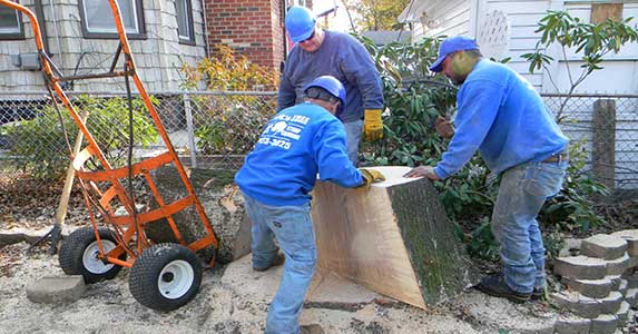 Queens Tree Removal - jrs tree services